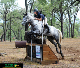 Navigating her way around the CCI2 Star on Tiraumea Sportsman was Madison Simpson at the Warwick Horse Trials.