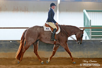 Having travelled to compete all the way from The Caves near Rockhampton, Robyn Edgar is pictured here aboard Glenlock Armani Code. The pair faired very well on both days of competition in both Halter & the Hunter Under Saddle classes.