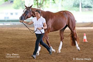 Mel Gauld runs out She's Hot Stuff in Saturday's Junior Horse Hunter In Hand.