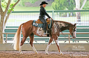 So Hot N Charming & Shirley Sommer in Sunday's Senior Horse Western Pleasure.