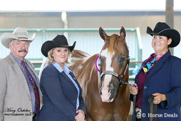 Sunday's judges were Mr Jeff Hall & Mrs Lyn Hoffman seen here with the Overall Supreme Halter Horse under one judge, Ya Call That Subtle, shown by owner, Katrina Lewis