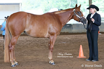 Debbie O'Sullivan's It Started With A Kiss was the Champion Open & Amateur Paint Bred Mare/Filly on the Sunday.