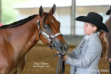 RSQ Sheza Impressive Kid was successfully shown by Brianna Simpson in several halter classes over the weekend.