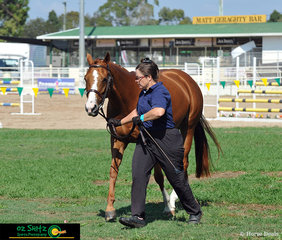 Friday was Local Day at the 2019 Warwick Show, Angela Hammond competed, Iliyia Kya in the hack arena.