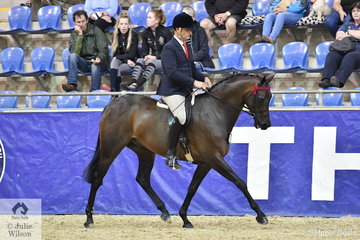 Simon Deleeuw rode Leah Walsh's  already well performed, 'KP Royal Prince' to be declared Four Year Old Young Hack Champion.