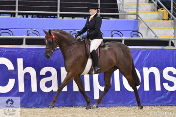 Successful Victorian rider, Briony Randle got her 2019 Hufglocken Grand National Saddle Horse and Rider Championships off to a great start this evening by claiming the  Walsh Family Grand National Champion Young Horse award with Judy Ivory's Five Year Old Galloway, 'KP Simply Exquisite'.