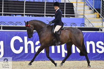 Jayne Anderson's 'Regal Replica' shown by Universal Stables and ridden by Phil Bobic was declared Champion Five Year Old Hack.
