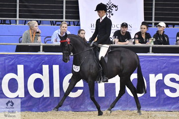 The Universal Stables and Michelle Harpley nomination, 'Merival Park Royal Doulton' was declared Champion Six Year Old Galloway.