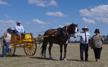 Grand champion delivery - Ruben driven by William Lewin, owned by Richie James