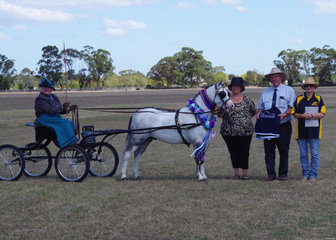 Grand champion non hackney, Eagle Park Starburst driven by Julie Abrehart