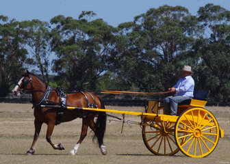 William Lewin driving Ruben, owned by Ritchie James