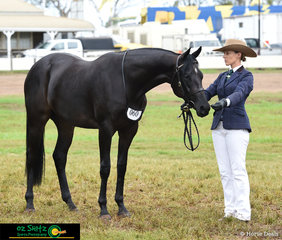 Emily Denyer presenting All Aces in the All Breeds Halter Two Year Old Futurity on the final day of the 2019 Toowoomba Royal Show.