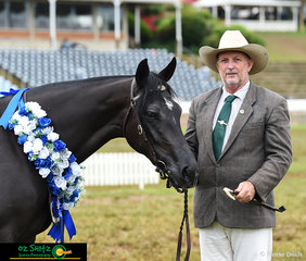 Hillview Lodge Opulent presented by the Bryans' family won the All Breed Halter Two Year Old Futurity on the final day of the 2019 Toowoomba Royal.