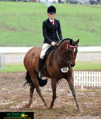Even with boggy conditions, Tremayne Royal Opera worked super for Charlee Anthony in the Open Large Lightweight Galloway Hack class on the final day of the 2019 Toowoomba Royal.