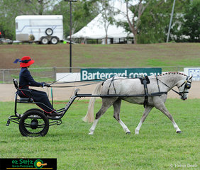 Shown on day one of the 2019 Toowoomba Royal Show, is Katherine Godley driving 4 year old Chappell Park Athens in the 'Novice Horse or Pony in Harness' class..