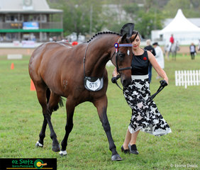 Dressed to impress was Lyndal Calleja leading Miss Teenage Queen in the Led ANSA Mare 4 years and over, over 15hh at the 2019 Toowoomba Royal Show.