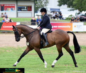 Executing a beautiful workout on the first day of the Toowoomba Royal Show in the Ridden Thoroughbred Gelding over 16hh class is Megan Perrin riding Geron.