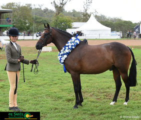 Supreme Led Show Hunter Pony Exhibit went to River Ridge Wings of Spring with his chuffed handler, Holly Hall Perrin at the 2019 Toowoomba Royal Show.