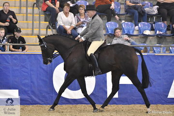 Michael Higginbottom from Monteith in South Australia rode his, 'Lauriston Park Masquerade' to make Top Ten in the Romsey Park Grand National Large Hack Championship.