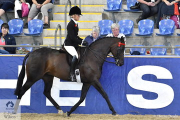 Margot Haynes from Mt Barker in South Australia rode her own and David Quayle's, 'Her Highness' to take fourth place in the SJM Equine Grand National Small Hack Championship.