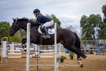 Tess Morrow who had a busy weekend competing in both rings 1 and 2 pictured here with NP Dark star  taking 1st place in the 104cm