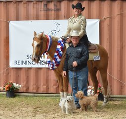 Non Pro Derby Champion Susan McCormick and His Diluted Gunner Photo Credit Michelle Hinder