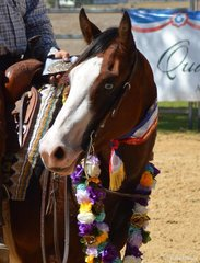 QP Dun Gun It Quarter Plus & Xtreme Genes Open Futurity Champion Photo Credit Michelle Hinder