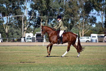Jana Poppe working out on R. Hunt's Elmcroft Huntingdale, in the Show Hunter ring.
