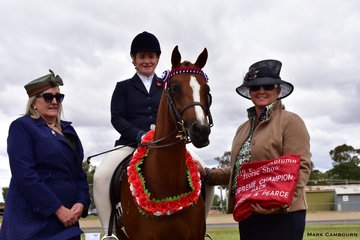 Emma Fahey's Naruni Park Maniquine was awarded Supreme Champion Hack by judges Annie Williams and Jacqui Langfield.