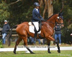 """Phoebe Dixon in the CCN1*S Interschools riding """"Zompare"""""""