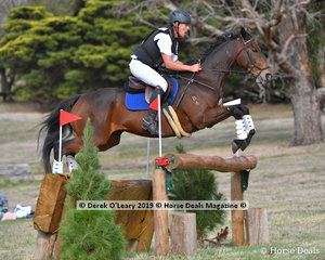"""Paul Chow riding """"Ned Flanders LCF"""" in the CCI3*S"""