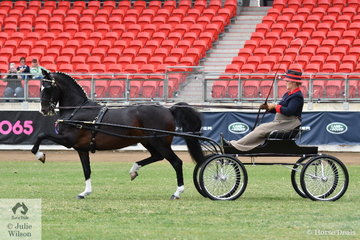 Talented reinswoman, Melissa Bensley drove the Jones and Bensley nomination, 'Cherry Farm Alarick' to win the class for Hackney Horse Show Vehicle Turnout.