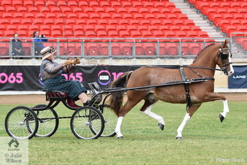 Prolific exhibitor and prolific winner, Elsa Avery from Victoria drove the Avery Famly's, 'Crosswynds Our Brenin' to win the class for Non Hackney Horse Show Vehicle Turnout on day one of the 2019 Sydney Royal Easter Show.