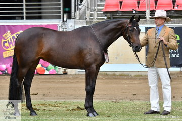 Well known and successful Australian Stock Horse exhibitor, Adam Wellington is pictured with his lovely, 'Glen Lee Rivoli Try Tech' (G.L.R. Ray Tech/G.L.R. Keola) that won the class for Australian Stock Horse Mare Four Years and Over N.E. 15hh.