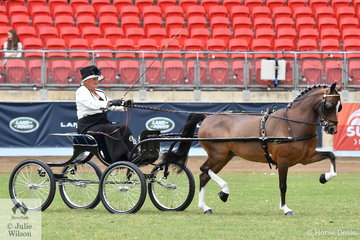 Wendy Ragg drove the Ragg and Proctor Show Team's nomination, 'Glenwood Limited Edition' to take second place in the class for Hackney Pony Show Vehicle Turnout.