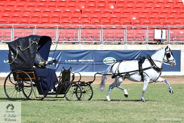 Amanda Proctor drove the Ragg and Proctor Show Team's, 'Glenwood Simply Divine' to take out the Two or Four wheeled Hard Tyred Vehicle Turnout Championship.