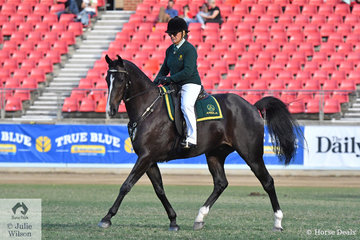 Experience is everything and Teena Bridge has plenty of it as well as success. As rider, trainer, coach and judge, Teena today rode Claire Mourant's, 'Silverthorn Stun Gun' to claim the 2019 Sydney Royal Ester Show Senior ASHLA class.
