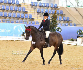 """Kathleen Mullan and her lovely mare """"Divinity"""" had a brilliant day - winning Champion Newcomer Open Hack, Champion Owner Rider Small Open Hack and Champion New Star Off The Track."""