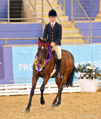 """The O'CONNOR FAMILY Champion Owner/Rider Large Open Galloway """"Chippenham Zulu"""" and Tyler Kelly.  UPDATE: Tyler & Zulu won Grand Champion Owner Rider on Saturday evening's showcase of Champions."""