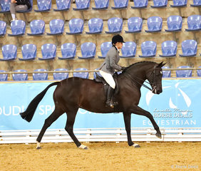 """Nellie Zar and """"Symphony"""" at the gallop in The STAFFORD FAMILY Owner/Rider Small Show Hunter Hack event."""