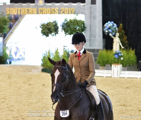 """Reserve Champion in The STAFFORD FAMILY Owner/Rider Small Show Hunter Hack event """"Valintino"""" and Brynie Lee. UPDATE: Brynie Went on to win Grand Champion Rider over 18 years on Saturday night's programme of Grand Champions."""