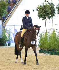 """""""Carlton Park Formality"""" and Paige Sinnamon pictured entering the arena for their workout in The STEPHEN McCLINTOCK VETERINARIAN Owner/Rider Small Open Hack event."""