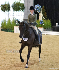 """Kaitlin Martin and """"Divina"""" working out in The DIAMOND DELUXE HORSEWEAR Owner/Rider Large Show Hunter Hack event."""