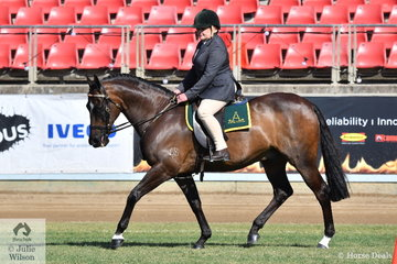 Regular and successful Sydney exhibitor, Melise Tuma-Webb rode her, 'M-Jay Fortune' (Win D Fortitude/M-Jay Arizona) to take third place in the class for Ridden Australian Stock Horse Gelding Over Four Years N.E. 15hh