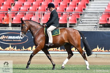 Paul Davidson rode the Camelot Stock Horses, Sheridan Gallagher and Sharyn McKell nomination, 'Jarendan Just Saying' (Jarendan Just is/Longborne Vanity fair) to take third place in the class for Ridden ASH Gelding Four Years and Over, Over 15hh.