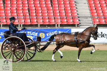 Amanda Proctor drove the Ragg and Proctor Show Team's, 'Glenwood Limited Edition' to claim the Sulky/Buggy Pony Turnout Championship.