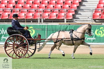 Andrew James drove his own and Corinne Collins' nomination, 'Nawarrah Park Pink Panther' to take out the Sulky/Buggy Pony Turnout Reserve Championship.
