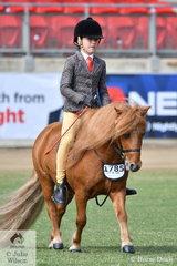 Hallie Halpin-Bishop rode Michelle McLean's, 'Chesapeake Park Twilight' to win the Ridden Shetland Pony Gelding class.