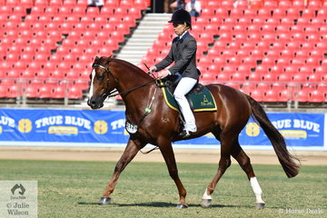 Dana Smith rode her, 'Camelot Double Impression' (Royalle Double Your Money/Camalot Rivoli First Impression) to win the class for ASH Hack Stallion Over 15hh.