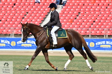 Fiona Gordon rode her own, 'Gordonvale Casanova' (Royalle Heartacre/Quiera Cassie) to win the class for Ridden Australian Stock Horse Gelding Four Years and Over N.E. 15hh. They went on to take out the ASH Ridden Hack Championship.